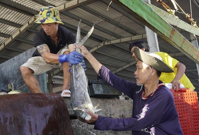 Ngư dân Bình Định đánh bắt xuyên Tết: Tết mà, ai chẳng muốn bên vợ con - 4