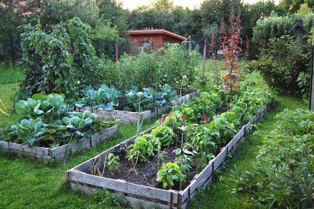 Khu vườn 100 năm tuổi quả gì cũng có của người phụ nữ yêu trồng trọt - 2