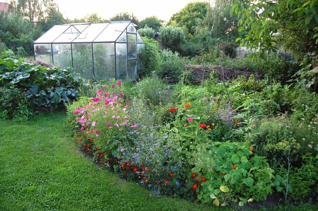 Khu vườn 100 năm tuổi quả gì cũng có của người phụ nữ yêu trồng trọt - 10