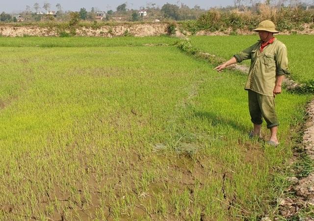 Cả trăm hecta lúa lo chết khát cạnh dự án chống hạn trăm tỷ - 2