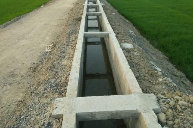 Cả trăm hecta lúa lo chết khát cạnh dự án chống hạn trăm tỷ - 3