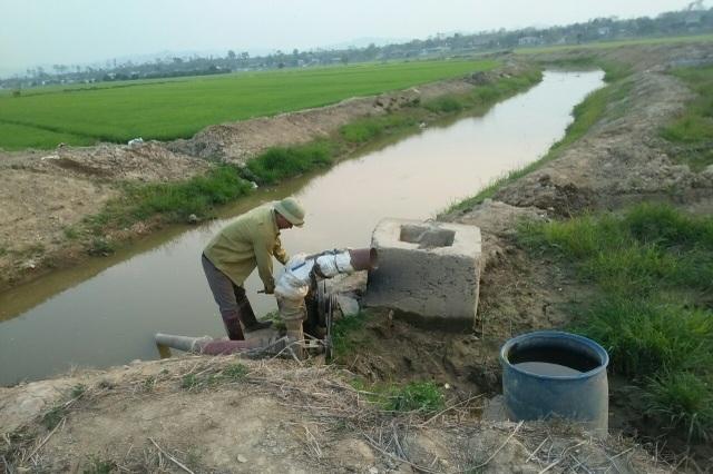 Cả trăm hecta lúa lo chết khát cạnh dự án chống hạn trăm tỷ - 5