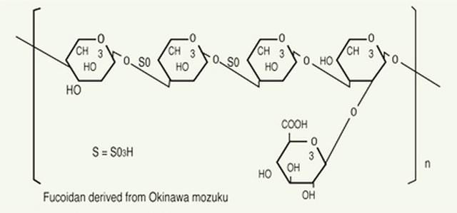 Món quà tuyệt vời cho sức khỏe từ Fucoidan có nguồn gốc từ tảo nâu - 2