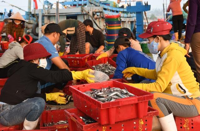 Ngư dân kiếm 3 triệu đồng chỉ sau một đêm ra khơi đánh cá cơm - 8
