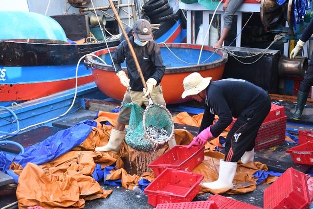 Ngư dân kiếm 3 triệu đồng chỉ sau một đêm ra khơi đánh cá cơm - 3