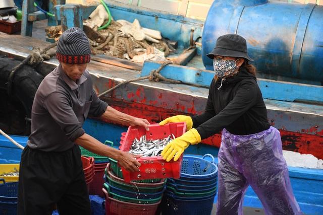 Ngư dân kiếm 3 triệu đồng chỉ sau một đêm ra khơi đánh cá cơm - 5