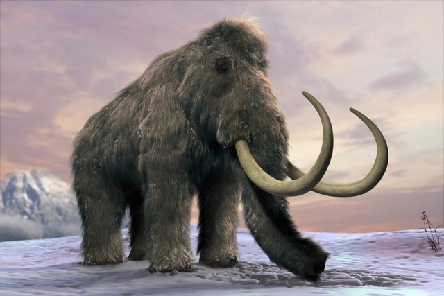 Do đâu mà voi ma mút rậm lông khổng lồ tuyệt chủng? - 1