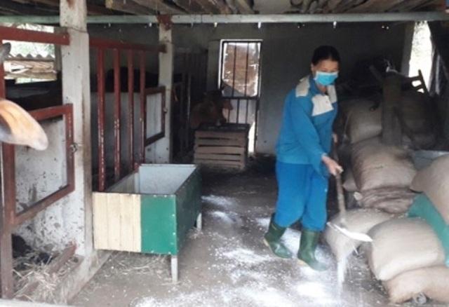Bệnh lạ ở trâu, bò đang lan rộng khắp Hà Tĩnh - 2