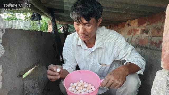 Nuôi toàn con đặc sản, lão nông Nam Định bỏ túi hàng trăm triệu đồng/năm - 3