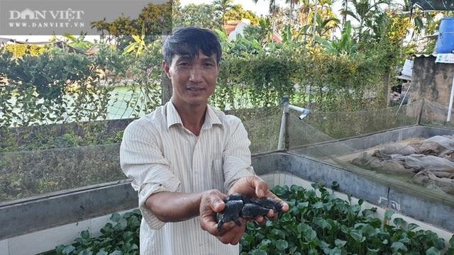 Nuôi toàn con đặc sản, lão nông Nam Định bỏ túi hàng trăm triệu đồng/năm - 4