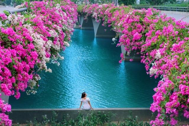 Chiêm ngưỡng vườn hoa hồng khổng lồ khoe sắc giữa khu đô thị xanh Ecopark - 10