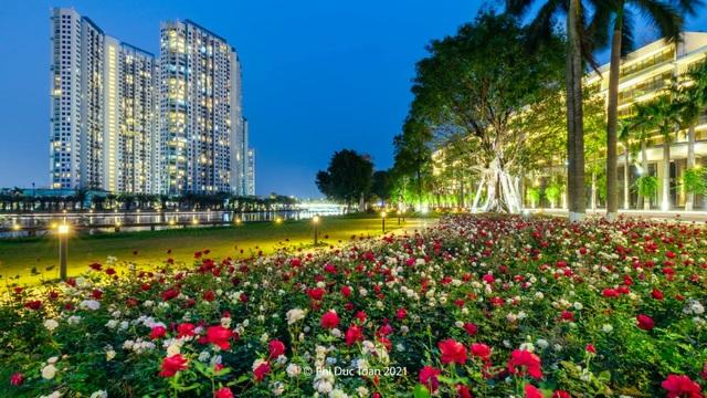 Chiêm ngưỡng vườn hoa hồng khổng lồ khoe sắc giữa khu đô thị xanh Ecopark - 2