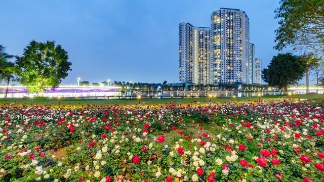 Chiêm ngưỡng vườn hoa hồng khổng lồ khoe sắc giữa khu đô thị xanh Ecopark - 8