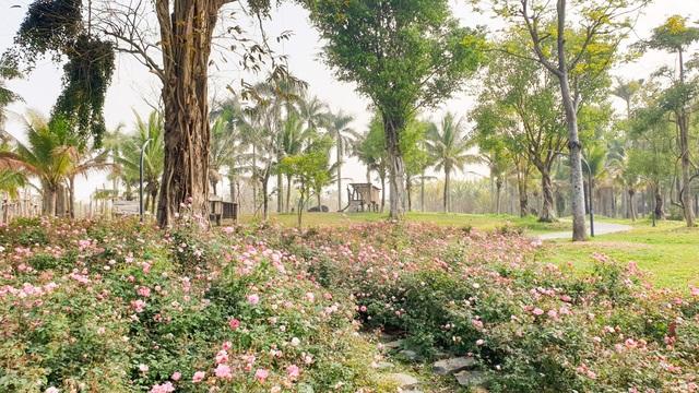 Chiêm ngưỡng vườn hoa hồng khổng lồ khoe sắc giữa khu đô thị xanh Ecopark - 5