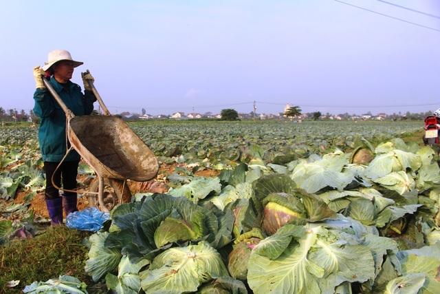 Người trồng rau méo mặt khi bán cả xe rau không bằng... 1 công thợ phụ hồ - 3
