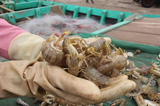 Đầu xuân, ngư dân Nam Định ra khơi nhưng thu nhập giảm - 2
