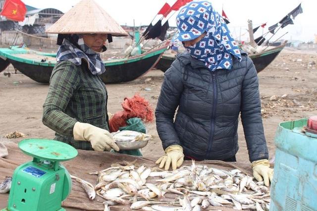 Đầu xuân, ngư dân Nam Định ra khơi nhưng thu nhập giảm - 6