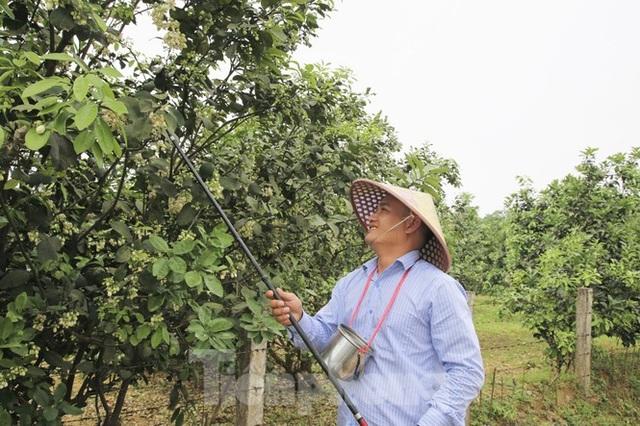 Xem nông dân Hà Tĩnh thụ phấn cho đệ nhất bưởi - 16