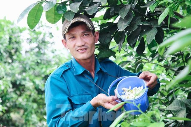 Xem nông dân Hà Tĩnh thụ phấn cho đệ nhất bưởi - 5