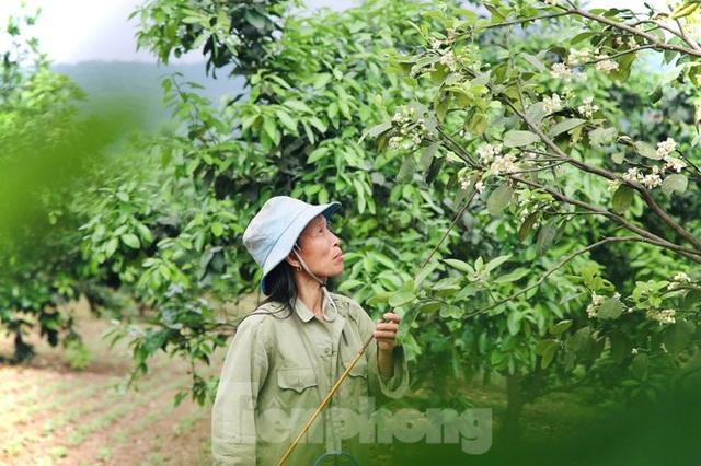 Xem nông dân Hà Tĩnh thụ phấn cho đệ nhất bưởi - 6