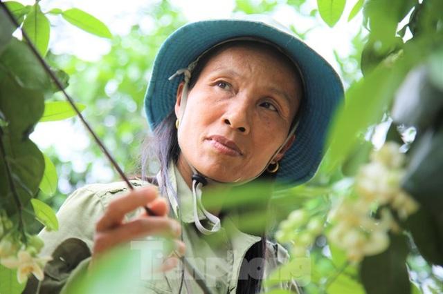 Xem nông dân Hà Tĩnh thụ phấn cho đệ nhất bưởi - 7
