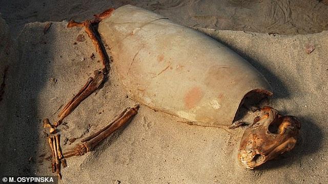 Tìm thấy nghĩa địa thú cưng 2.000 năm tuổi - 2