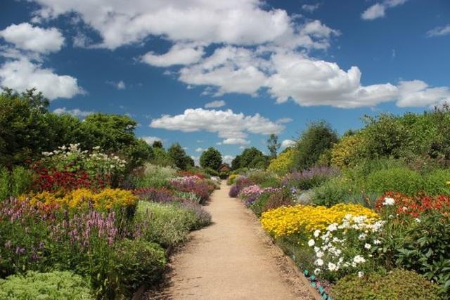 Cặp vợ chồng biến mảnh đất khô cằn thành vườn hoa vạn người mê sau 20 năm - 8