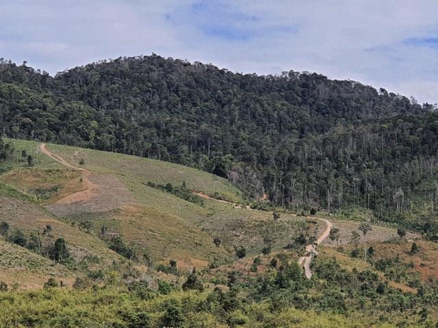 Khởi tố vụ cả đoàn xe độ chế rầm rập tiến vào phá nát rừng xanh Tây Nguyên - 3