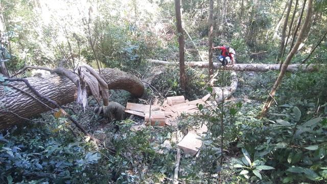 Khởi tố vụ cả đoàn xe độ chế rầm rập tiến vào phá nát rừng xanh Tây Nguyên - 4
