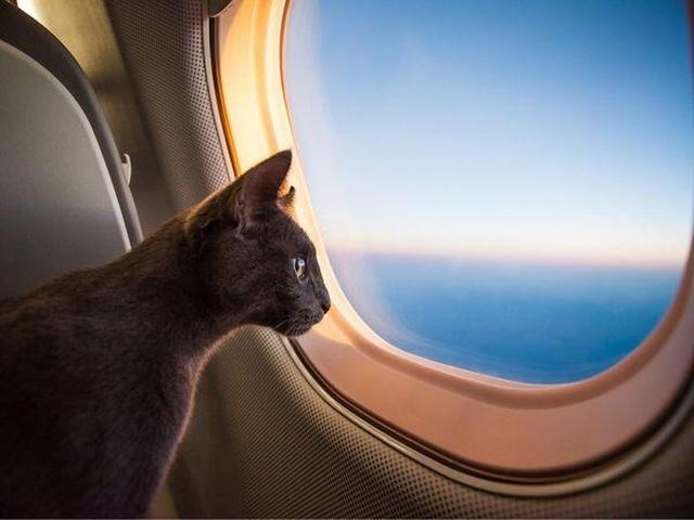 Hy hữu phi công bị mèo tấn công, máy bay hạ cánh khẩn cấp - 1
