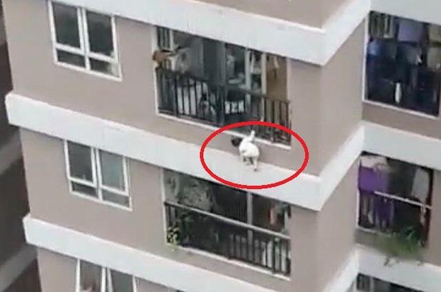 Vụ bé gái rơi từ tầng 12A: Buộc mọi chung cư lắp lưới, nên hay không? - 1