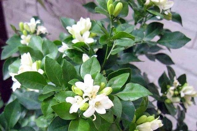 Các loại cây nên trồng trong nhà để hút ẩm không khí khi trời nồm - 1