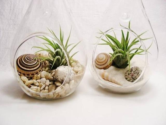 Các loại cây nên trồng trong nhà để hút ẩm không khí khi trời nồm - 3