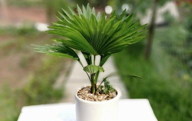 Các loại cây nên trồng trong nhà để hút ẩm không khí khi trời nồm - 7