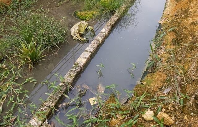 Dân khốn khổ vì trang trại lợn: Nước thối đến mức trâu còn không muốn tắm - 5