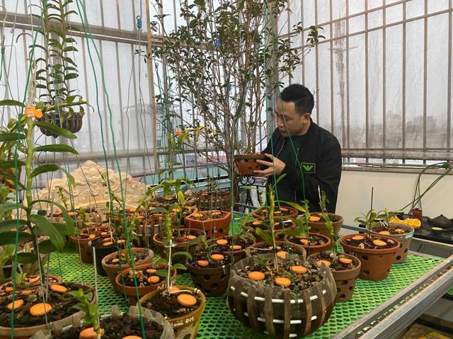 Nghệ nhân Nguyễn Văn Mạnh bật mí cách xử lý cây con, tưới nước cho cây lan - 5