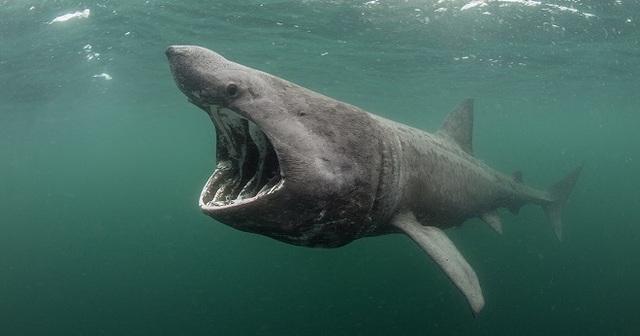 Xác quái vật biển dài 7 mét, nặng 4 tấn trôi dạt bờ biển xứ Wales - 3