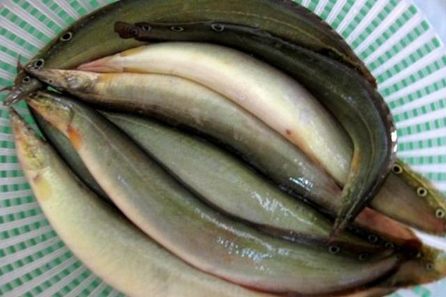 Loại cá vừa ngon lại rất tốt cho gan luôn sẵn có ở chợ Việt - 1