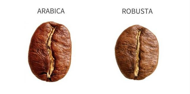 Cà phê Arabica và cà phê Robusta khác nhau như thế nào? - 2