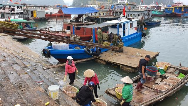 Mục sở thị chợ cá nổi tiếng ở Cái Rồng, Vân Đồn sau bão Covid-19 - 1