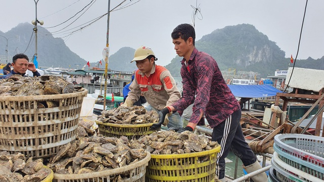 Mục sở thị chợ cá nổi tiếng ở Cái Rồng, Vân Đồn sau bão Covid-19 - 5