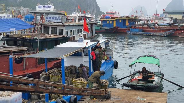 Mục sở thị chợ cá nổi tiếng ở Cái Rồng, Vân Đồn sau bão Covid-19 - 4