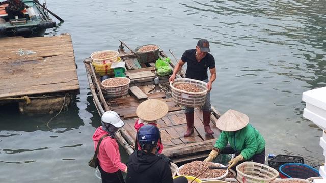 Mục sở thị chợ cá nổi tiếng ở Cái Rồng, Vân Đồn sau bão Covid-19 - 3