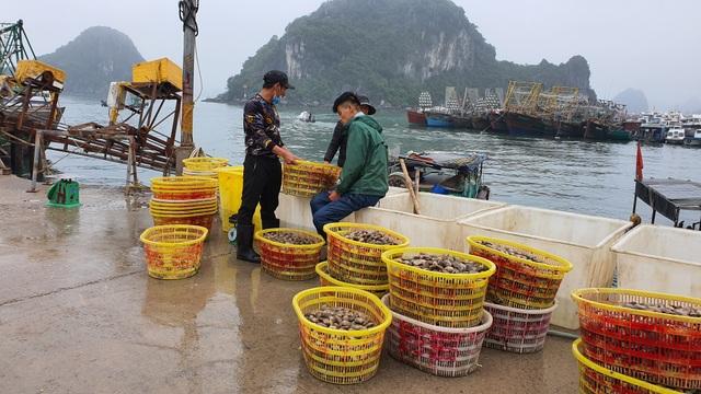 Mục sở thị chợ cá nổi tiếng ở Cái Rồng, Vân Đồn sau bão Covid-19 - 8