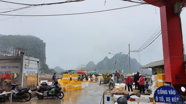 Mục sở thị chợ cá nổi tiếng ở Cái Rồng, Vân Đồn sau bão Covid-19 - 2