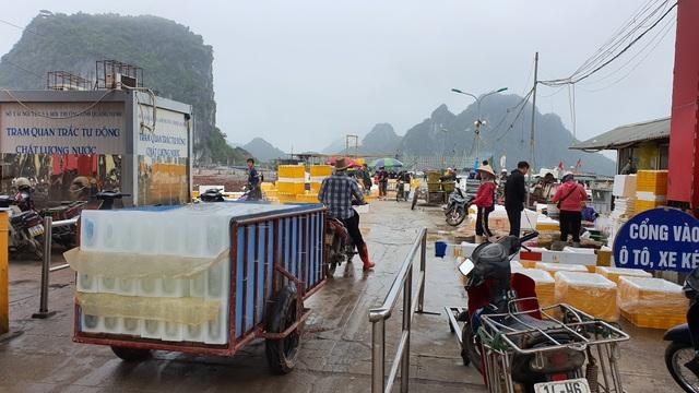Mục sở thị chợ cá nổi tiếng ở Cái Rồng, Vân Đồn sau bão Covid-19 - 9