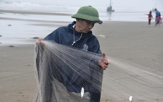 Kiếm tiền triệu mỗi ngày nhờ thu hoạch cá trích - 4