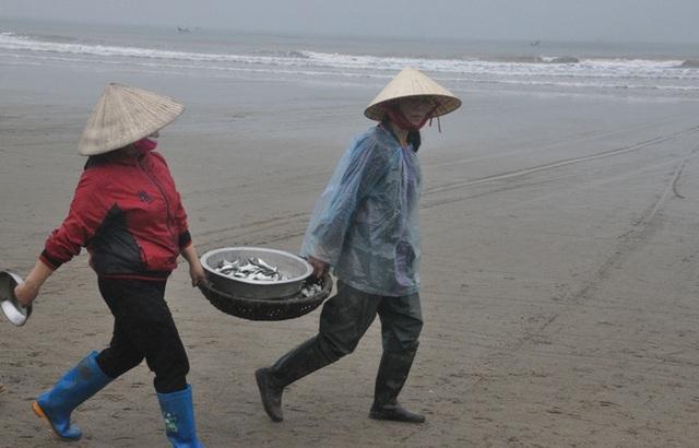 Kiếm tiền triệu mỗi ngày nhờ thu hoạch cá trích - 7