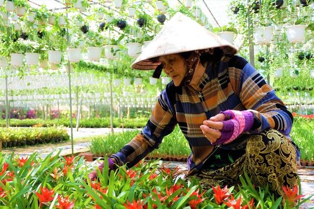 Chuyện về nữ nông dân tỷ phú làm giàu từ cây cảnh treo - 6