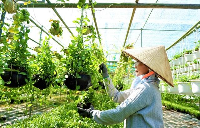 Chuyện về nữ nông dân tỷ phú làm giàu từ cây cảnh treo - 7